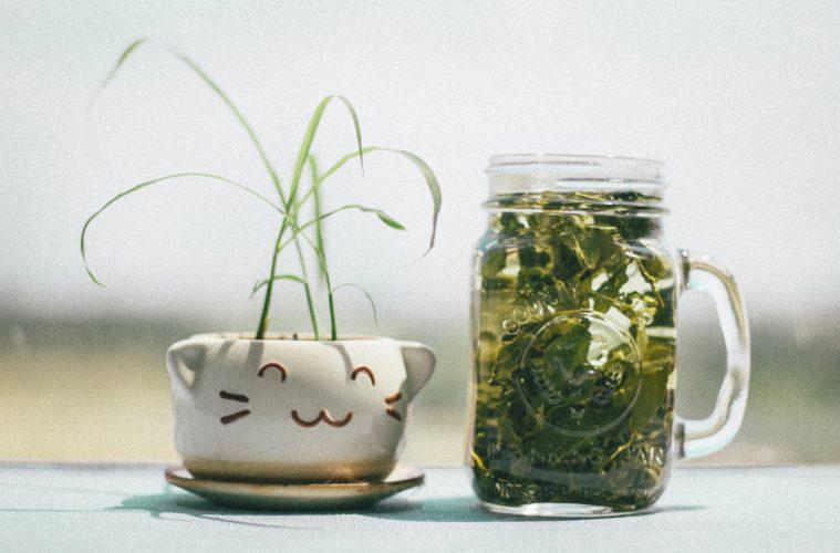 matcha tea cup