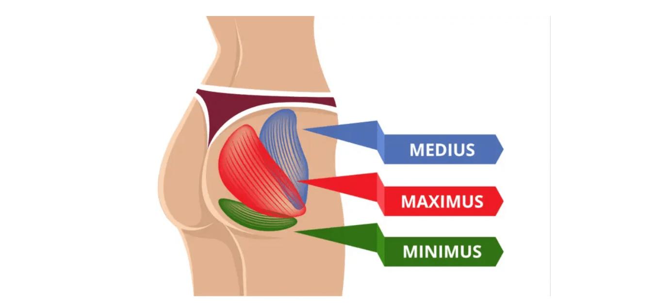 butt muscles